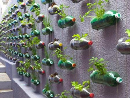 'Guerrilla gardening', Phuket, Thailandia.